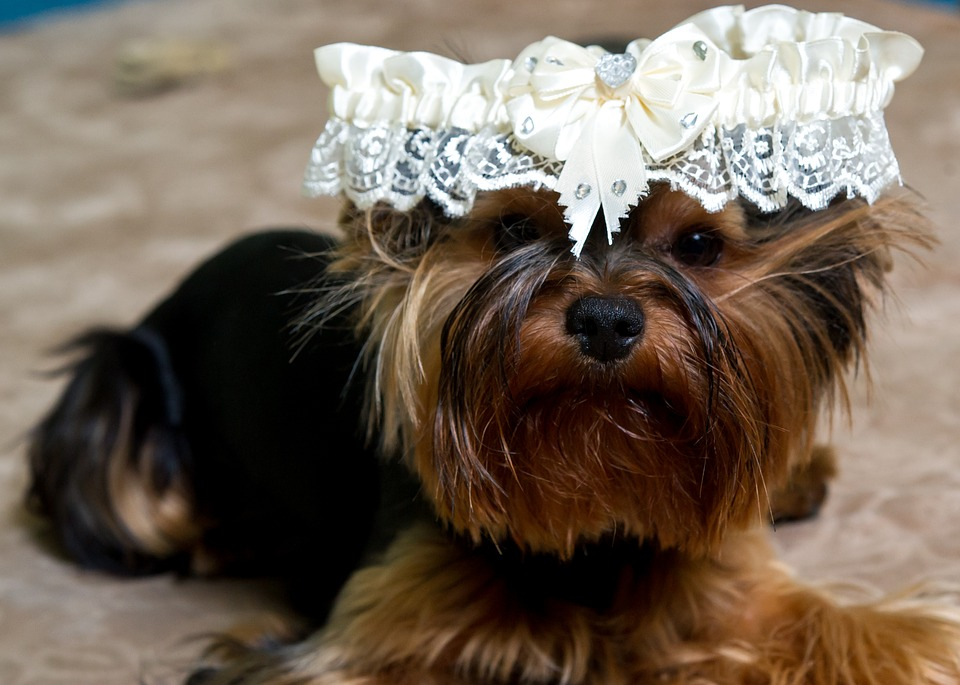 puppy-1786288_960_720