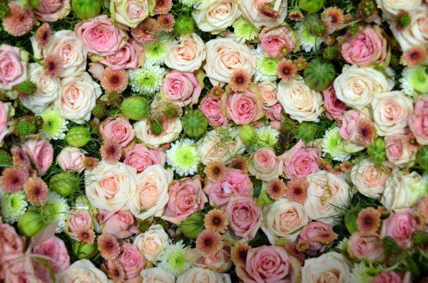 blutenmeer-pink-rose-romantic-158697